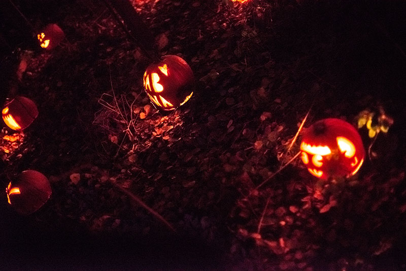 Pumpkins at Springbrook Nature Center